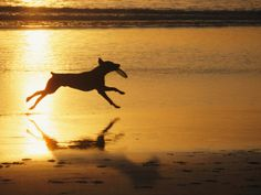 #whiterockdogs #dogbeach #dogs #garymcgrattenrealtor