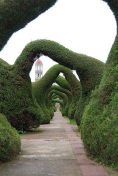 Zarcero Topiary Gardens, Costa Rica topiari garden, arch, alice in wonderland, path, garden walkways, costa rica, gardens, place, zarcero topiari