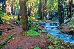 Limekiln State Park - Big Sur, Ca. I spent my 5th birthday here with my parents among the redwoods.  The hippies (which did not include us) were rife that year and were engaged in very hippy activities at the campgrounds. hehe