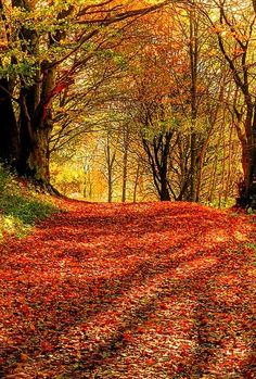 Amber path. #fallfoliage #fall #fallcolors #color #leaves #fallleaves #travel #budgettravel BudgetTravel.com