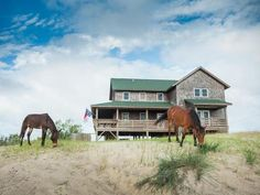 The Corolla wild horses graze near a vacation rental home in Currituck's Outer Banks, NC.