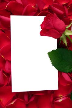 Large Transparent Vertical Frame with Red Roses