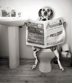 Dogs Can Read... (>‿◠)
