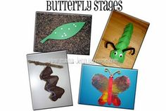 Butterfly Stages Crafts