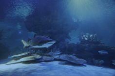 Exhibits | Greater Cleveland Aquarium