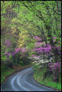 redbuds and dogwood trees