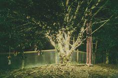 Tree lights - Dooran Qld