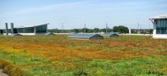 green roofs, plant green, river roug