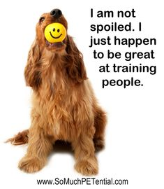 """""""I am a great people trainer."""" #dog #quote"""