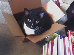 Pandora opens a box of books and cuteness ensues! #NYPLLittleLion
