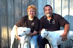 Florida couple who place retired racing greyhounds