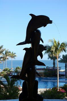 Dolphin Entrance - Cabo San Lucas, Mexico