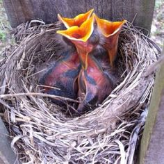 Baby birds in our fence.  So sweet.