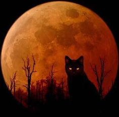Halloween Is Coming – Are You Ready? Check out this Halloween cat.