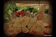Fleurs en origami. Origami Flowers