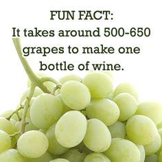Fun Wine Fact
