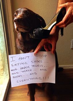 Dog Shame | I'm Fango and I can't stop eating shoes…AND paper...