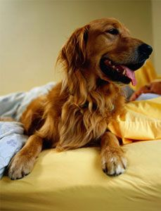 How to Get a Good Night's Sleep for You and Your Dog | Dog Whisperer Cesar Millan