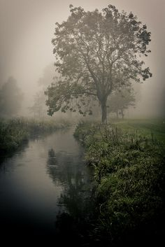 misty dream river