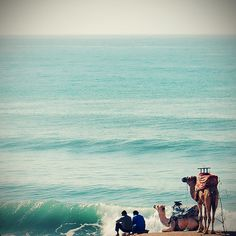 Morocco - Camels at the ocean seems funny to me! :)