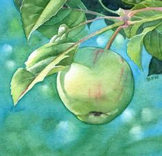 WILD APPLE watercolor painting, painting by artist Barbara Fox