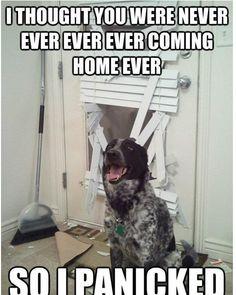 #funny #dog #pet