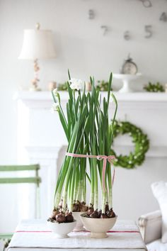 I want to grow paper whites next year!