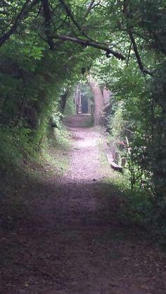 Passageway to Peace (Freeman Lake Trail Elizabethtown KY)3