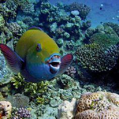 Hurghada sea life