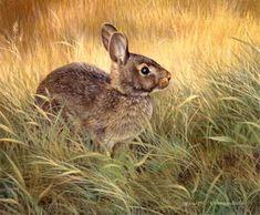 """""""Cautious"""", Cottontail Rabbit"""