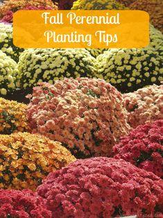 Fall Perennial Planting Tips