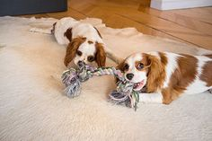 Dog Toys – Alerts and Tips