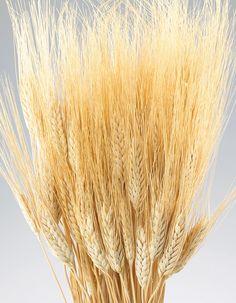 Wheat Natural @Whitney Tawney