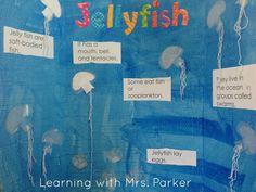Jellyfish Presentation Board