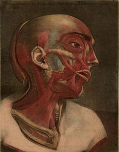 Essai_d_Anatomie_1754_0005 by Public Domain Review, via Flickr