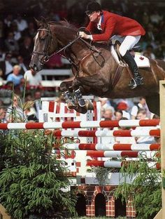Awesome Big Ben and Ian Millar! www.sporthorse-data.com