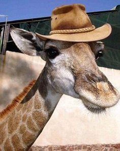 """So - Do Ya Like My New Hat  ?"""