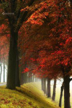 by larsvandegoor.com #Netherlands