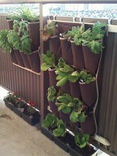 burlap, soda bottles, green walls, decks, herbs garden