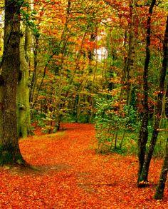 Autumn leaves are falling, falling, falling.