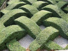 woven hedge