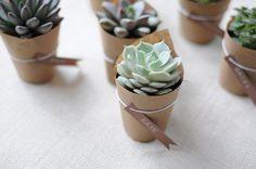 Mini vasos de Suculentas