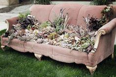 Cactus couch #repurposed #succulents