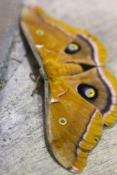 butterflies and moths -