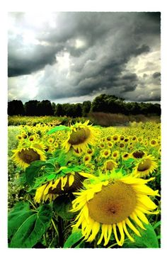 $72.00  August Storm, Original Signed Altered Art Photo Limited Edition by dahliahousestudios