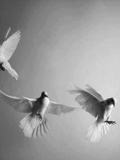 Beautiful doves.  Peace!