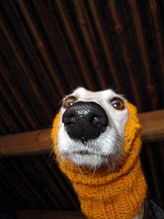Worm dog.