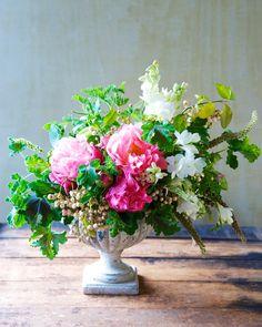Peonies in October | Kiana Underwood | tulipina.com