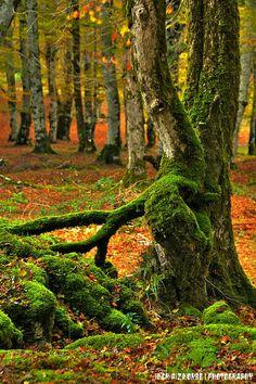 Urbasako koloreak / Colores de Urbasa,  Navarra  Spain More information Tourism Navarra Spain: ☛   ➦ Más Información del Turismo de Navarra  y España: ☛  #NaturalezaViva  #TurismoRural ➦   ➦ www.nacederourederra.tk  ☛  ➦ http://mundoturismorural.blogspot.com.es  ☛  ➦ www.casaruralnavarra-urbasaurederra.com ☛  ➦ http://navarraturismoynaturaleza.blogspot.com.es ☛  ➦ www.parquenaturalurbasa.com ☛   ➦ http://nacedero-rio-urederra.blogspot.com.es/