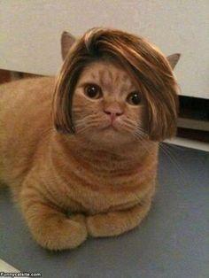 fancy hair kitteh